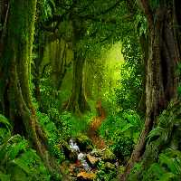 FunEscapeGames Rainforest…
